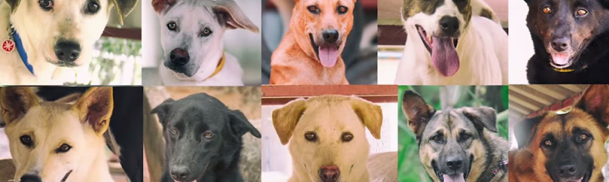 CHARITIES AND CELEBRITIES JOIN FORCES AGAINST THE DOG MEAT TRADE