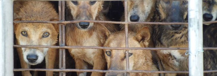 Please encourage British MPs to speak out against the dog meat trade