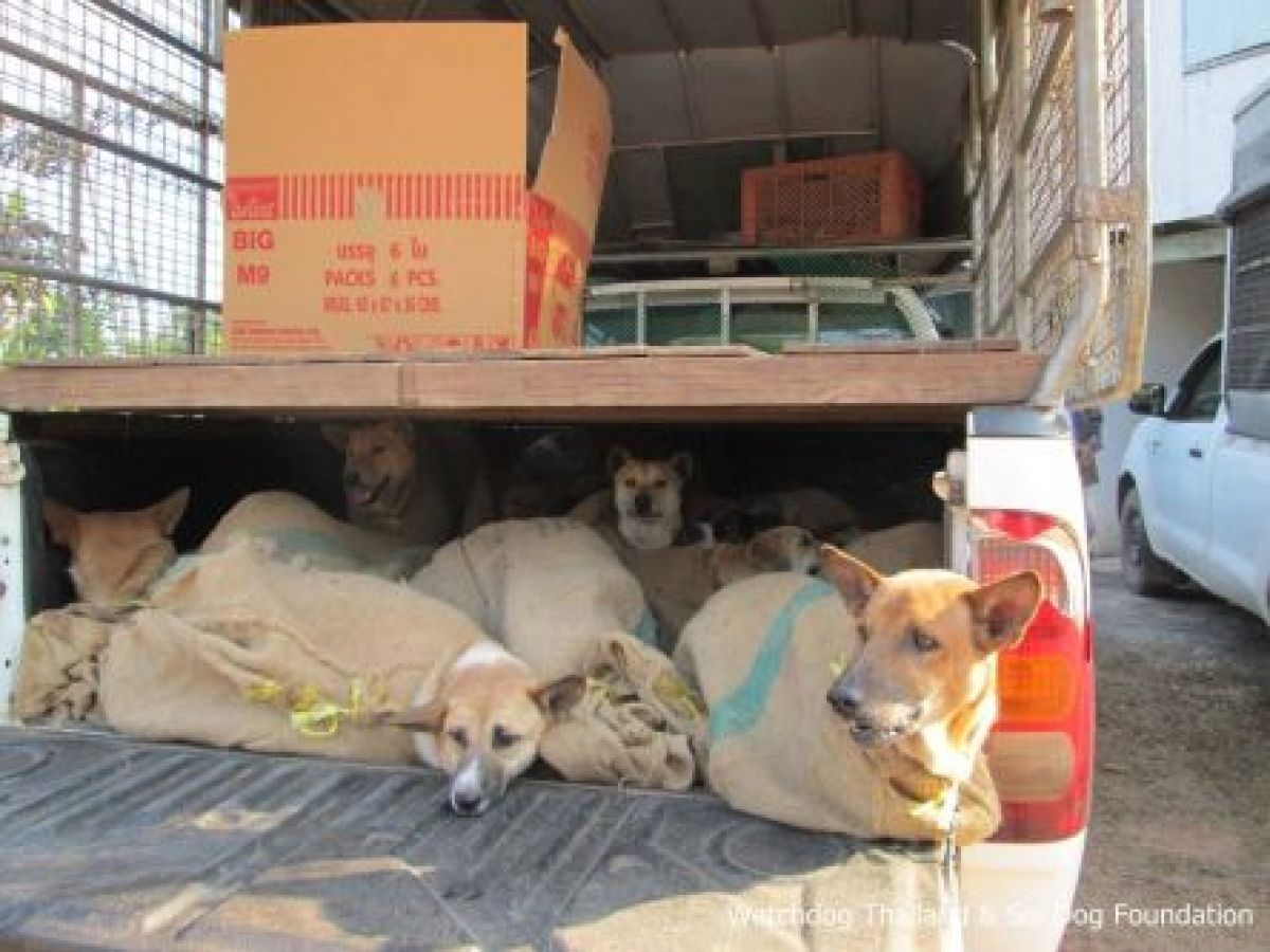 Vietnam gets tough on illegal cross-border dog trading